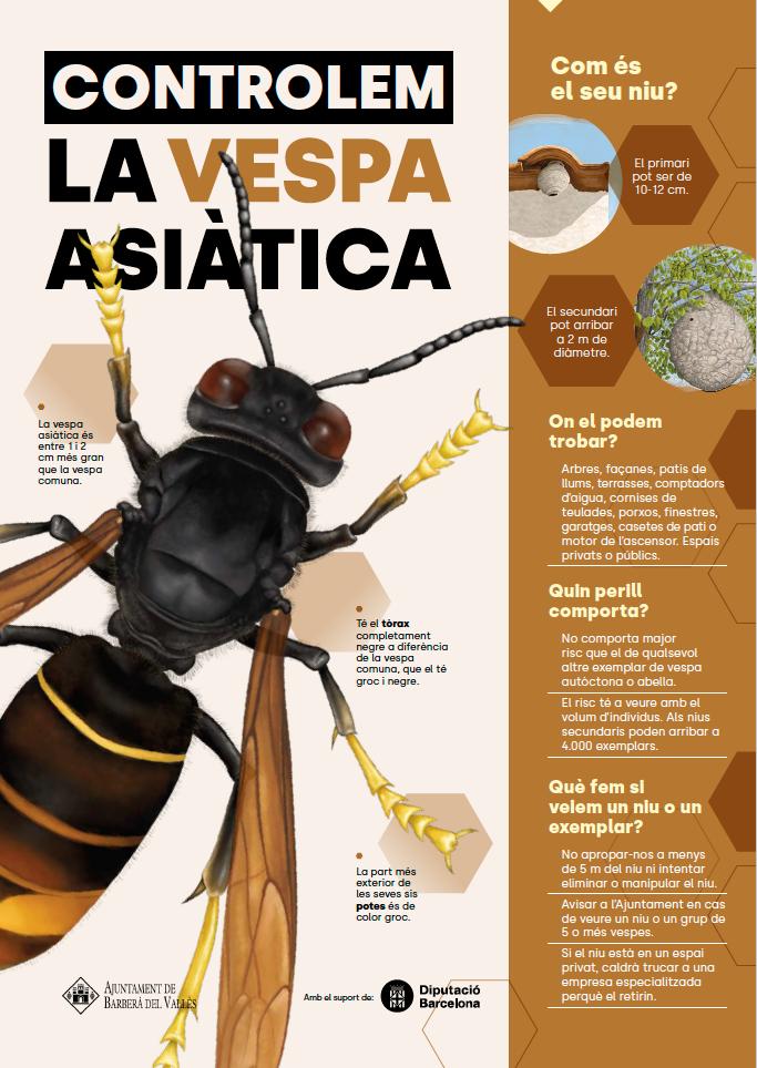 Cartell Vespa Asiàtica